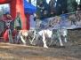 Wyścigi psich zaprzęgów 12-13.11.11 Witów