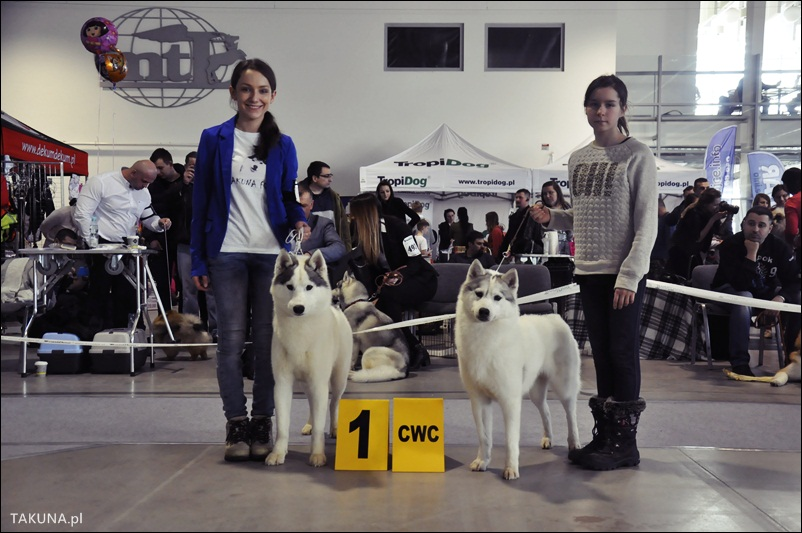 husky (1)